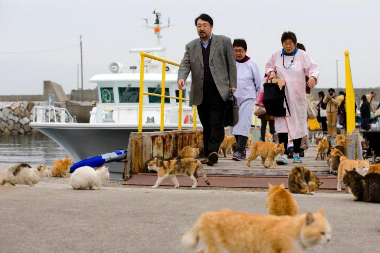 Aoshima-Miyazaki-Boat